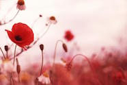 remembrance-day.321d308ee4
